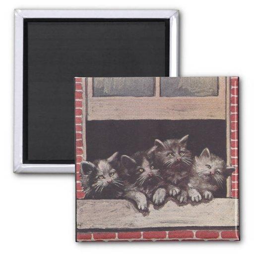 Gatos en el vintage de la ventana iman de nevera