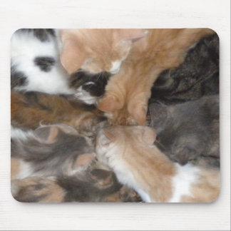 Gatos en un mousepad tapete de raton