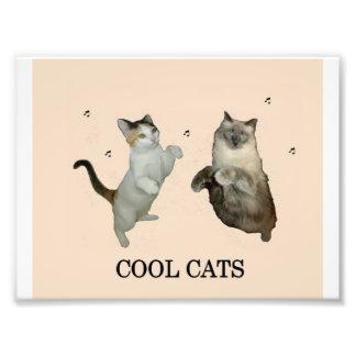 Gatos frescos fotos