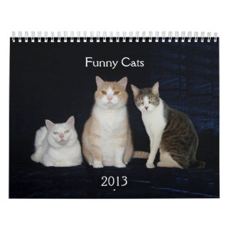 Gatos/gatitos divertidos calendario
