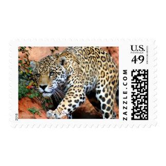 Gatos grandes - 10 sello