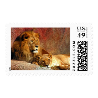 Gatos grandes - 6 sellos