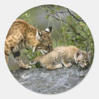 Gatos grandes - 9 pegatina redonda