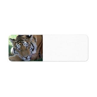 GATOS GRANDES de los ANIMALES SALVAJES de la Tigre Etiquetas De Remite