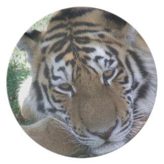 GATOS GRANDES de los ANIMALES SALVAJES de la Tigre Plato Para Fiesta