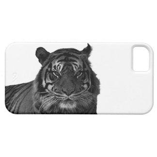 Gatos grandes en peligro tigre salvaje de la espec iPhone 5 carcasa