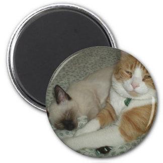 Gatos lindos imán redondo 5 cm