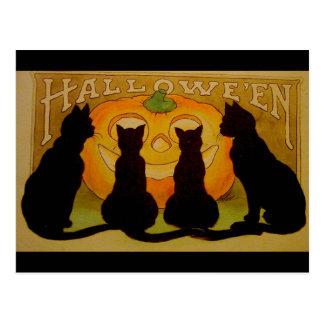 Gatos negros y Jack O Lantern de Halloween del vin Postales