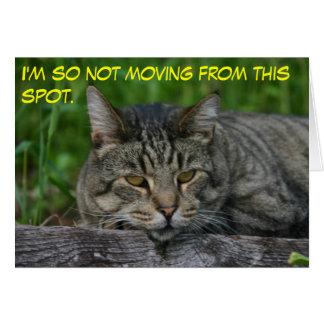 gatos: No me estoy moviendo tan desde este punto Tarjeta Pequeña