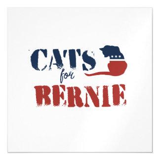 Gatos para Bernie