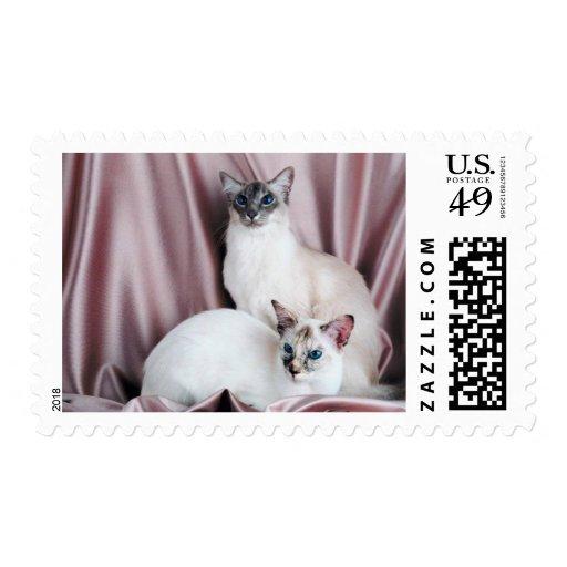 Gatos pedigríes 8 sello