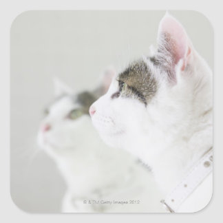Gatos Pegatina Cuadrada