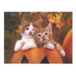 Gatos preciosos de la calabaza - tarjetas adaptabl tarjeta postal