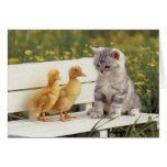¡Gatos preciosos, tarjetas de los gatitos, regalos