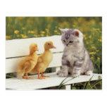 ¡Gatos preciosos, tarjetas de los gatitos, regalos Tarjeta Postal