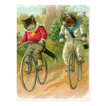 Gatos que montan las bicis postal