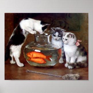 Gatos que pescan en cuenco del Goldfish Póster