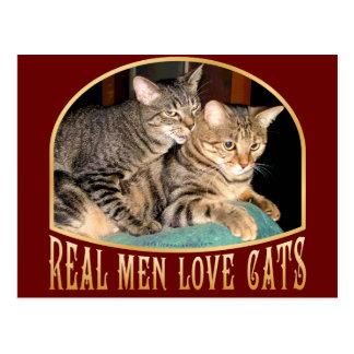 Gatos reales del amor de los hombres postales