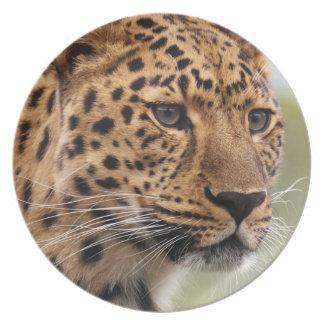 Gatos salvajes del leopardo plato de cena