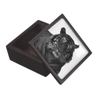 Gatos salvajes en peligro tigre de la especie caja de recuerdo de calidad