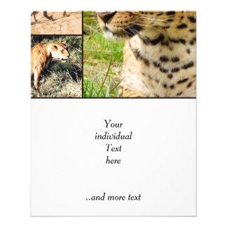 gatos salvajes folleto 11,4 x 14,2 cm