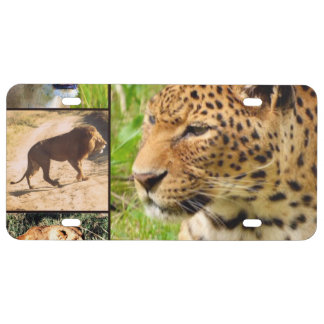 gatos salvajes placa de matrícula