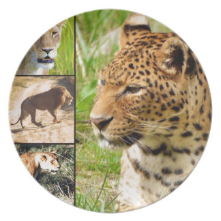 Gatos salvajes plato de comida