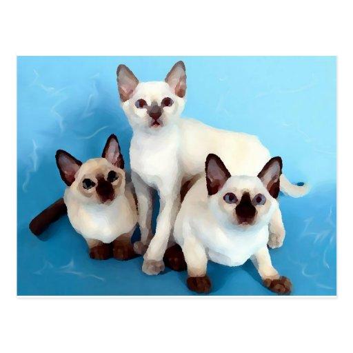 Gatos siameses postal