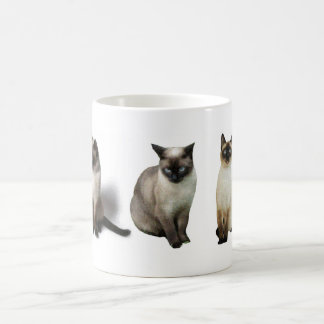 Gatos siameses taza de café