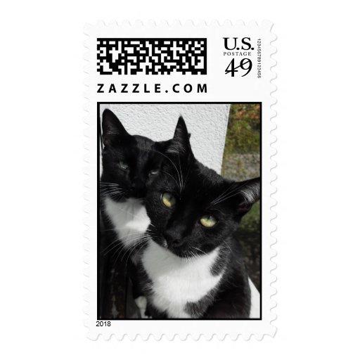 Gatos siniestros sellos