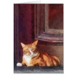 Gatos - Tabby anaranjado en entrada Felicitaciones
