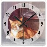 Gatos - Tabby anaranjado en entrada Reloj