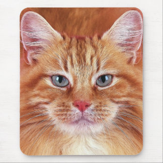 GATOS MOUSEPADS