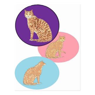 Gatos, tres, en productos de los varios tarjeta postal