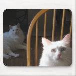 Gatos turcos hambrientos Mousepad del angora Alfombrillas De Ratón