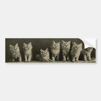 Gatos viejos retros de los gatitos de los gatitos pegatina para auto