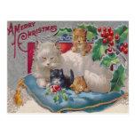Gatos y acebo postales