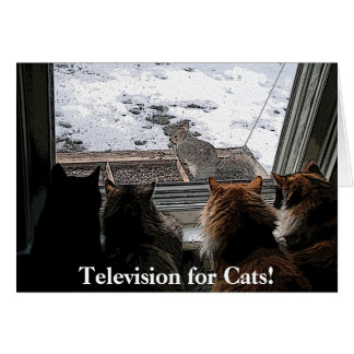 Gatos y ardilla felicitacion