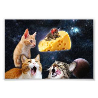 Gatos y el ratón en el queso fotografía