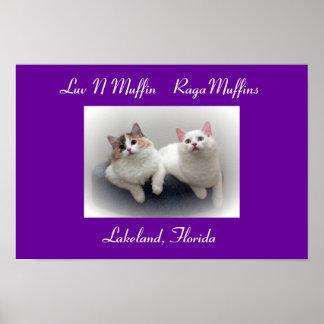Gatos y gatitos del RagaMuffin del mollete de Luv  Póster
