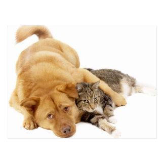Gatos y perros postal