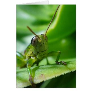 Gaudy grasshopper card