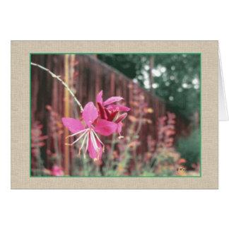 Gaura Blooming Greeting Card