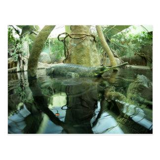 Gavialis gangeticus postcard