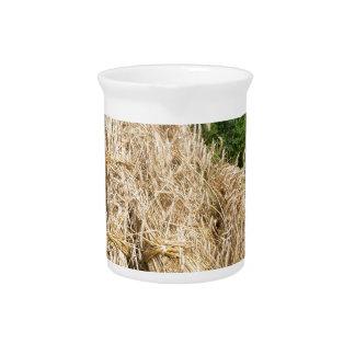 Gavillas de centeno que se colocan en el campo del jarras para bebida