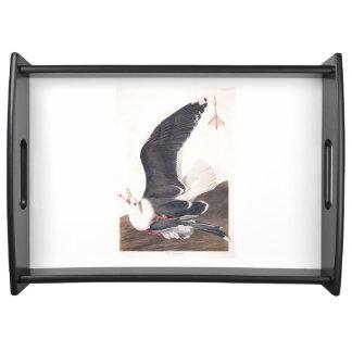 Gaviota apoyada negra de la placa 241 de Audubon Bandejas