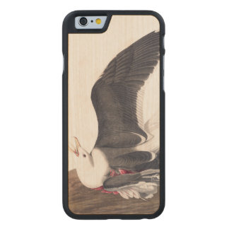 Gaviota apoyada negra de la placa 241 de Audubon Funda De iPhone 6 Carved® Slim De Arce
