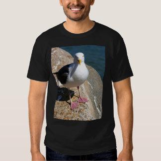 Gaviota, bahía de Morro, camisa de la oscuridad de