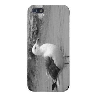 Gaviota blanco y negro iPhone 5 coberturas