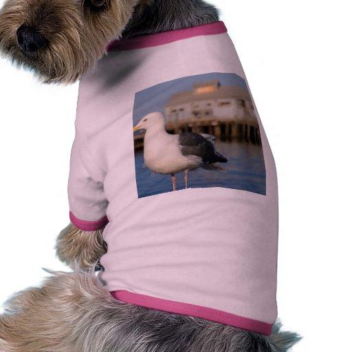 Gaviota Camisas De Mascota